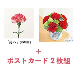 「母へ」&フラワーアレンジメント スペシャルギフトセット [特別盤]