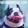WONDERFUL LIFE (通常盤)